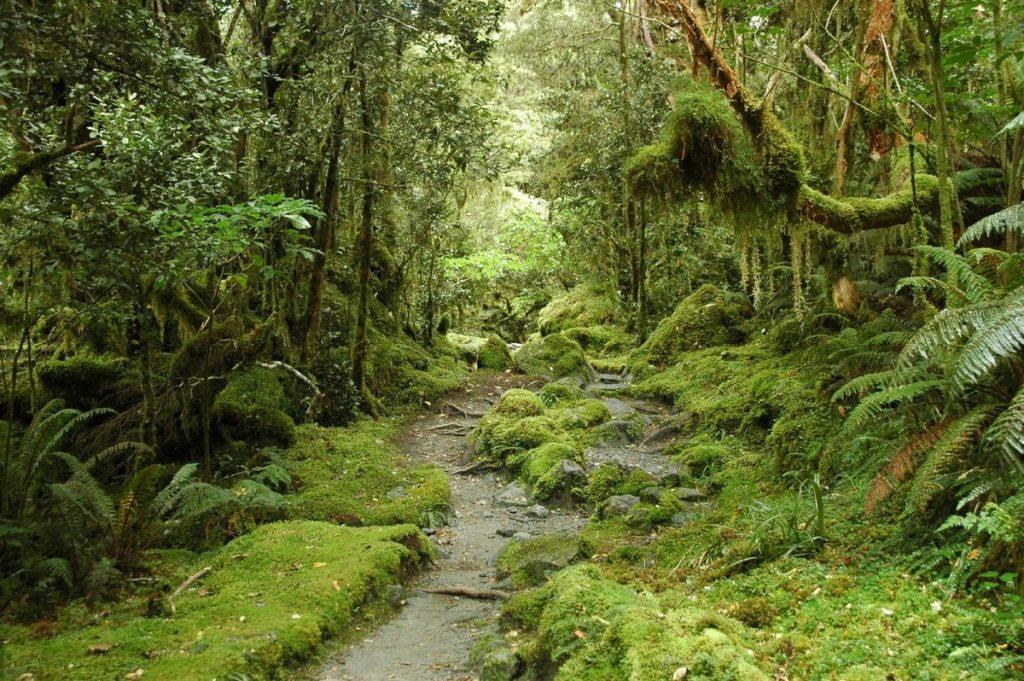 Районы распространения жестколистных вечнозеленых лесов и кустарников