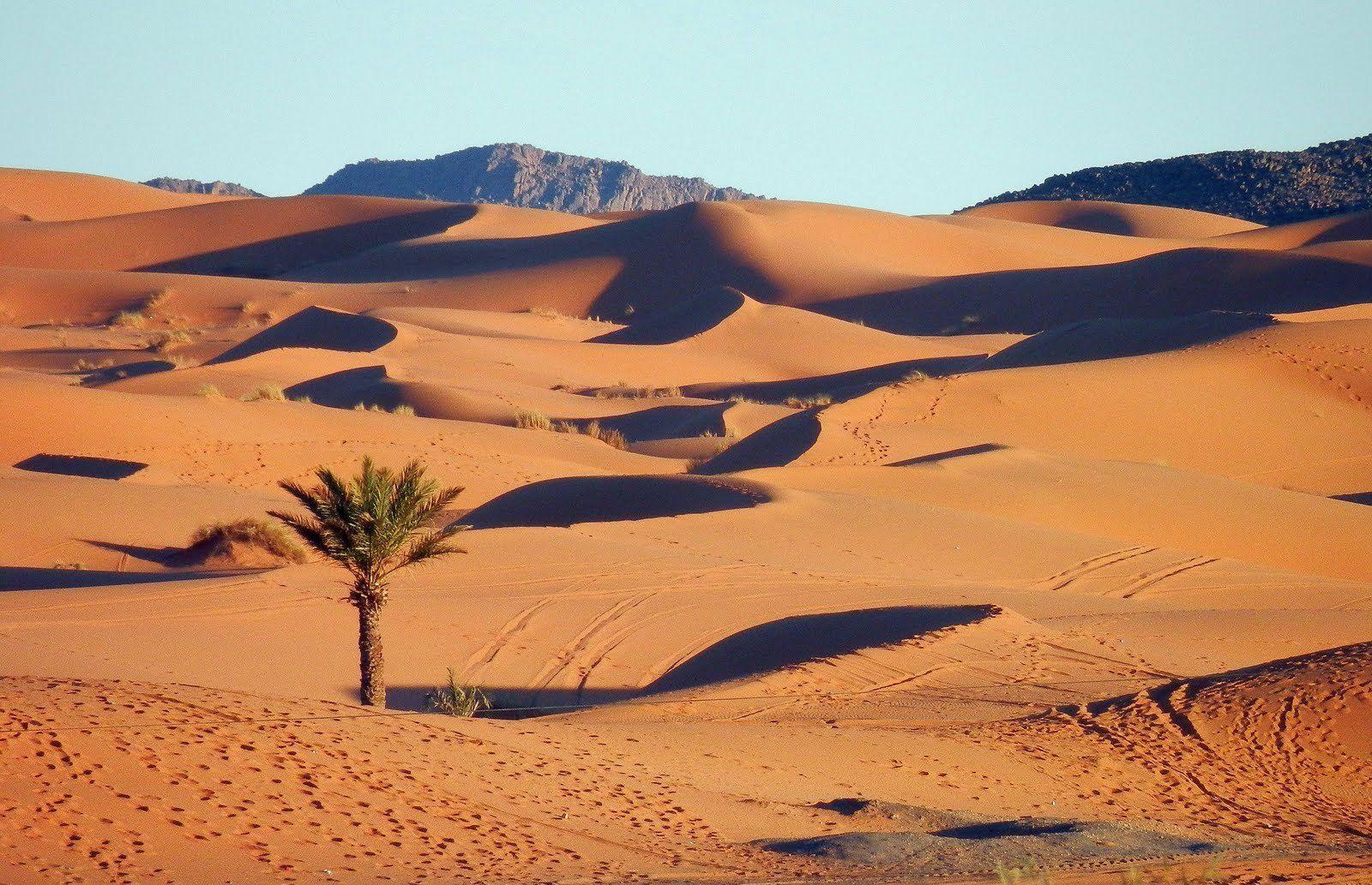 месту картинки природной зоны пустыни ходят