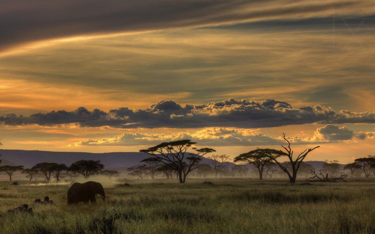 Присушить на фото африканская магия тех