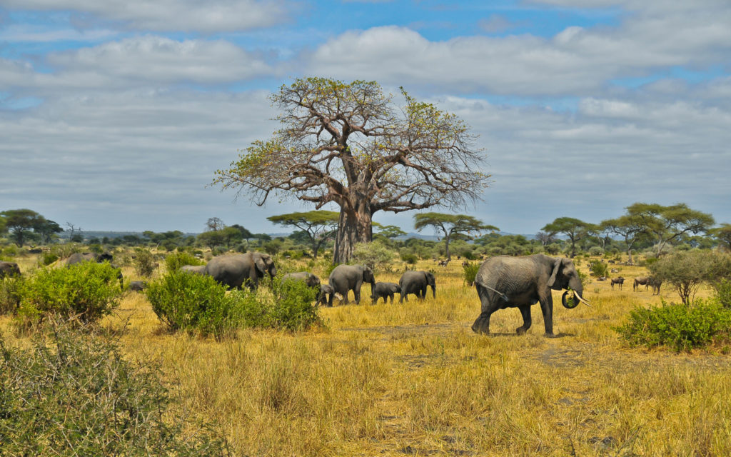 природа африки