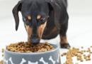 Особенности кормов для кормящих собак