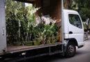 Саженцы декоративных растений, что это такое и зачем это нужно?