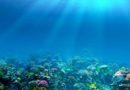 Океанология: направления и особенности науки