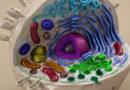 Органеллы (органоиды) клетки