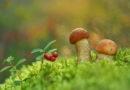 Высшие грибы