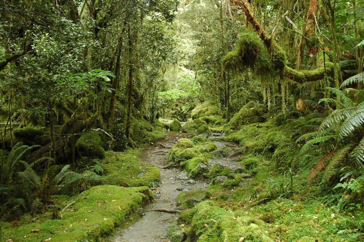 Жестколистные леса