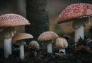 Клетка грибов