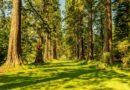 Биоценоз леса