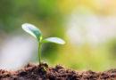 Побег растения